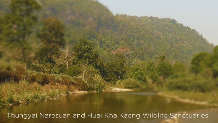 Thungyai Naresuan and Huai Kha Kaeng Wildlife Sanctuaries in Thailand home to diverse types of flora and fauna