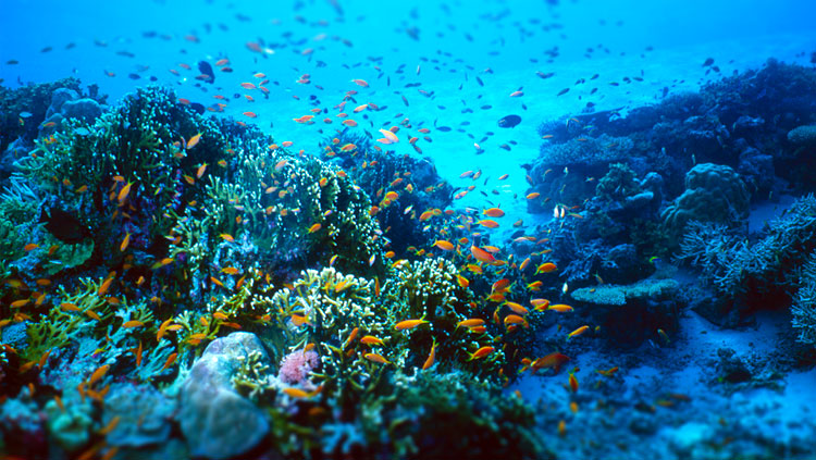 Diving and snorkeling in Krabi, Thailand provide a window for a variety of marine species